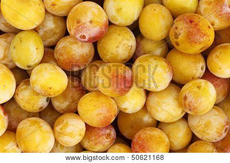 Mirabelles - Freshly Picked
