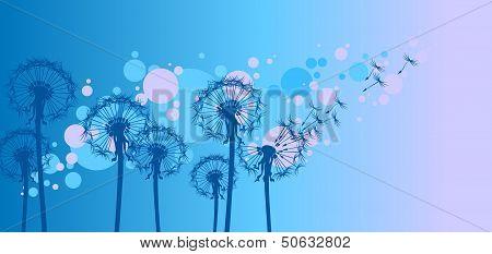 dandelions on blue background