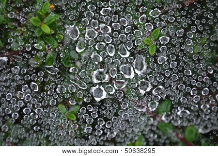 raindrops on a cobweb
