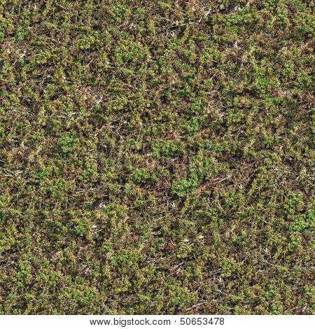 Seamless Texture of Coastal Steppe Vegetation .