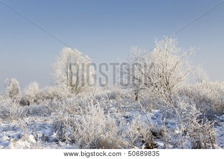 Frost On The Needles