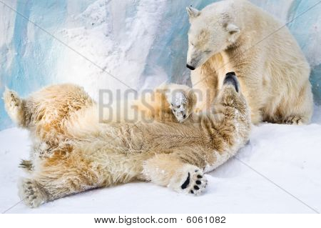 Couple Of Young Bears