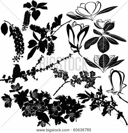 magnolia cherry and apple tree twigs vector