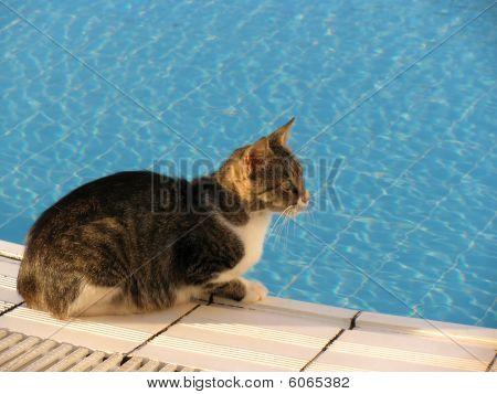 Cat At Pool