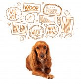 Cute cocker spaniel with barking speech bubbles above her head poster
