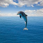 single jumping dolphin, beautiful seascape with deep  ocean  waters and cloudscape poster
