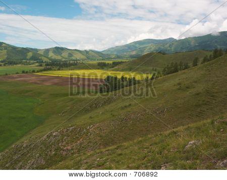 Vivid fields
