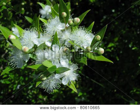 A closeup of white blossom in spring