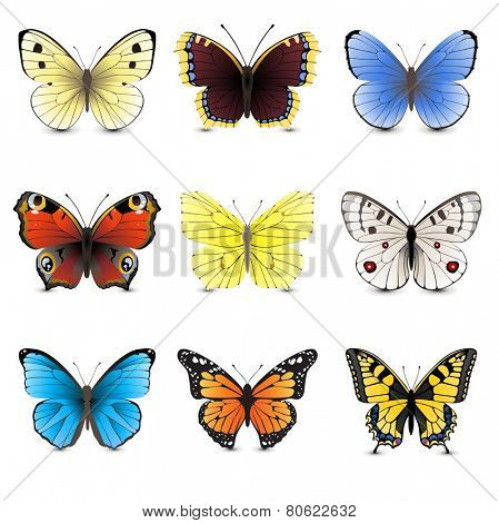 9 highly detailed butterfly icons