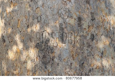 Tree brown bark as background clouse up texture