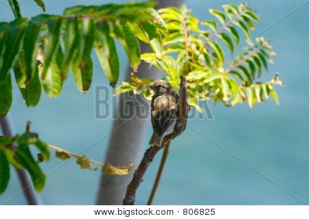 Female sparrow sits on tree branch poster