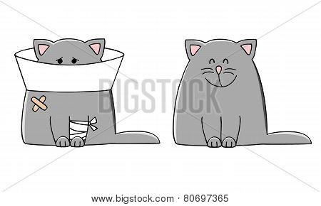 Cat Disease