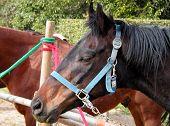 horses-detail poster