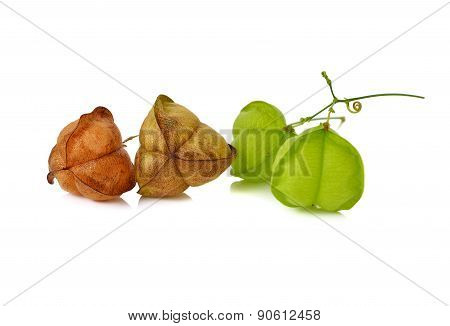 Balloon Vine Or Heart Pea With Stem On White Background
