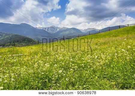 Carpathian Landscape With With Meadow