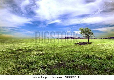 Meadows dreamscape