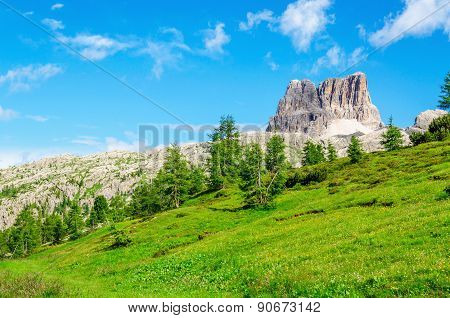Green pines, Dolomites Mountains, Italy