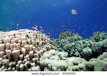 Colourful Pristine Coral Reef