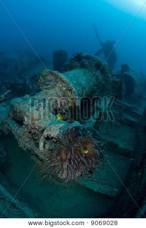 Marine Life On Shipwreck