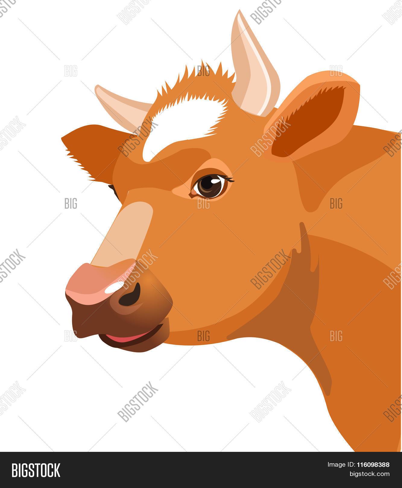 Cow Face Vector Image. Cow Face On Vector & Photo   Bigstock