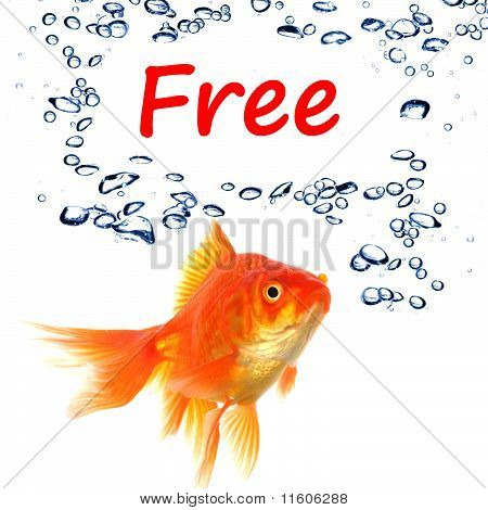 word free and goldfish showing sale or discount concept poster