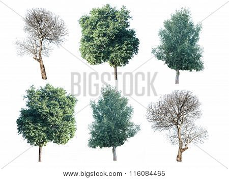 Set Of Six Green Trees And Dead Trees Isolated On White Background