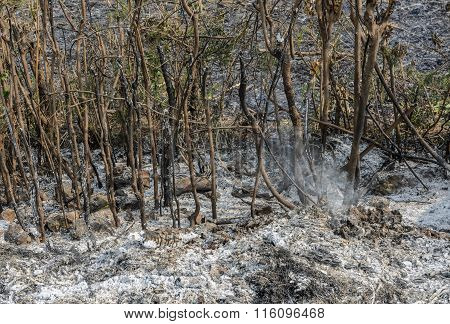 Ash Smut And Stubble O Burnt Field After Harvest