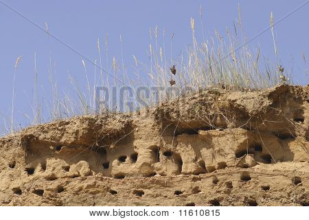 poster of Swallow nests on the top of sandy cliff