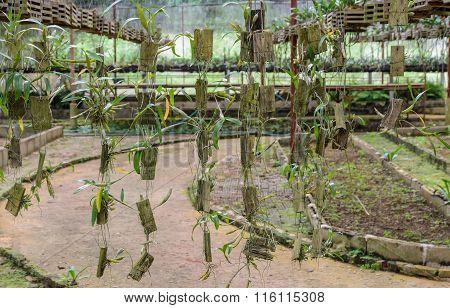 Orchid Plants In A Nursery