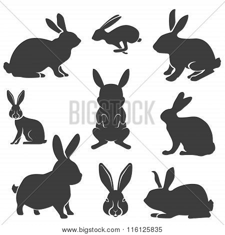 Set Of The Rabbits In Different Poses. Easter Rabbits.