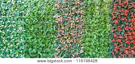 colorful wall of spadix flowers selective focus poster