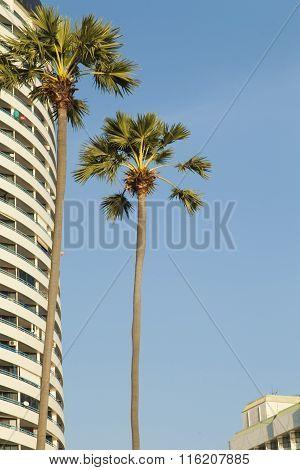 Palm Trees Ashore
