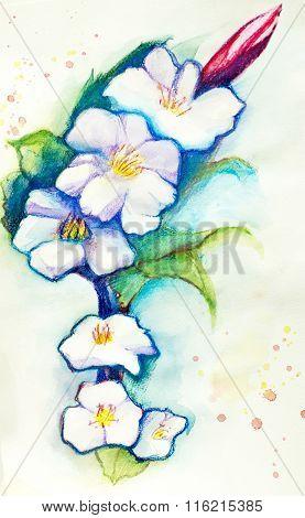 Flover Watercolor