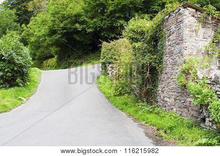 English Country Lane In Devon