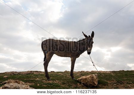 A donkey in Israely mountains in spring