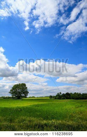 Vertical Grassland Field