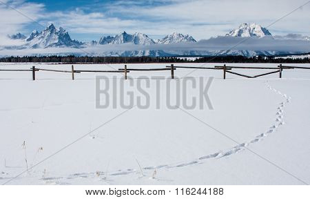 Snowy Tetons Western Fence And Pure Snow With Line Of Tracks