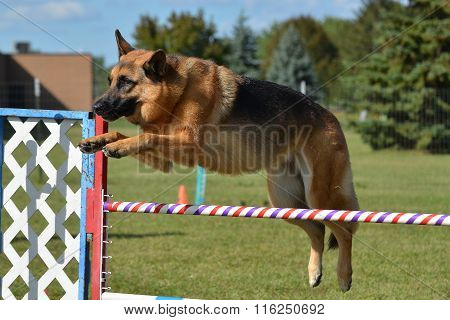 German Shepherd Leaping Over a Jump at a Dog Agility Trial poster