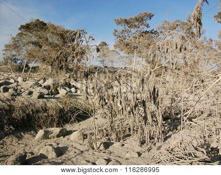 Volcanic ash destroys the upper slopes of Mount Merapi, Indonesia, after a severe volcanic eruption