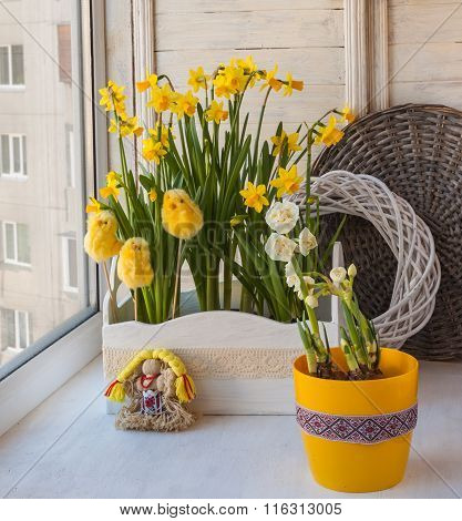 Narcissus In The Balcony Boxes