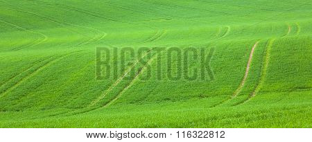 marks in the green field gives a harmonic pattern