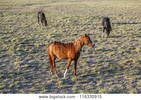 Horses At The Meadow