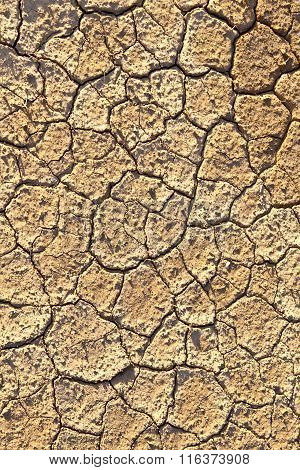 Loam In A Saline Basin