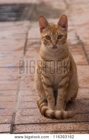 Serious orange cat sitting on the tone in tone tiles. Serious expression polite way of sitting. Funny mustache. poster