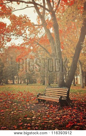Autumn Colorful Landscape In Misty Weather