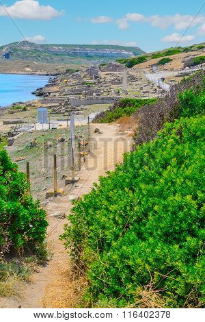 Dirt Path By The Coast In Tharros