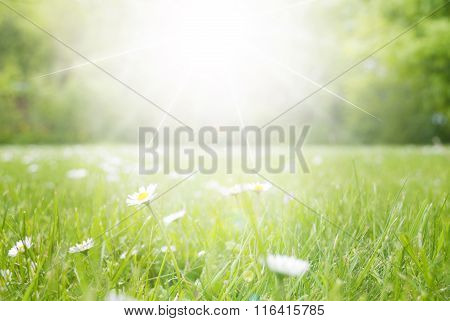 Meadow With Daisy Flowers, Copy Space, Sun And Sunshine