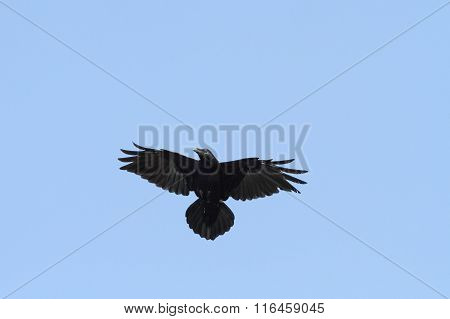 Raven On The Sky