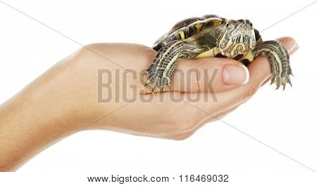 Turtle in woman hands isolated on white background