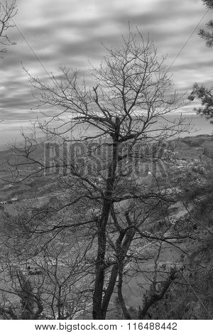 Tree On Top Of A Mountain.